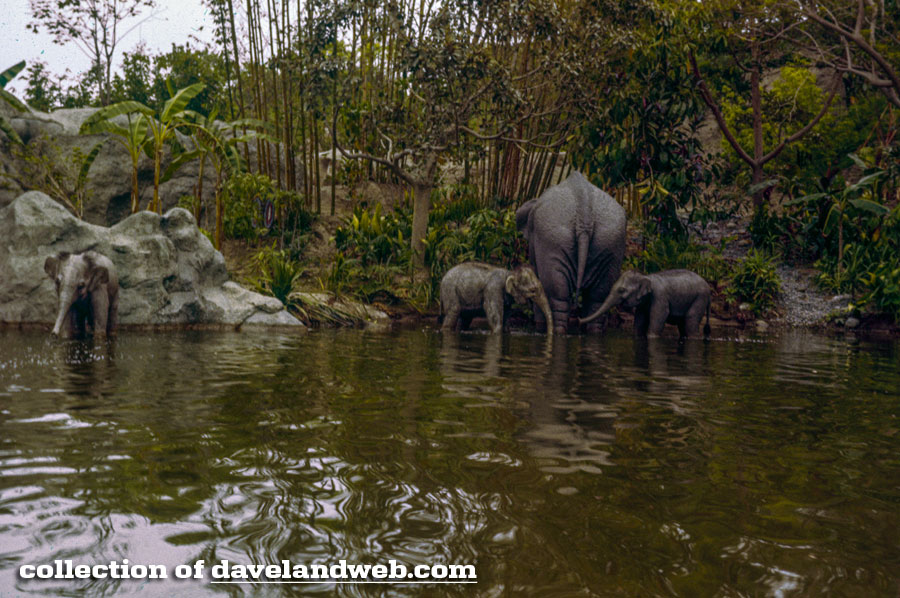1962 Jungle Cruise Indian Elephant Wading pool scene