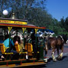 Disneyland Horse-Drawn Trolley in Central Plaza, March 1968